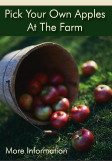 Pick Your Own Apples and Farmstand